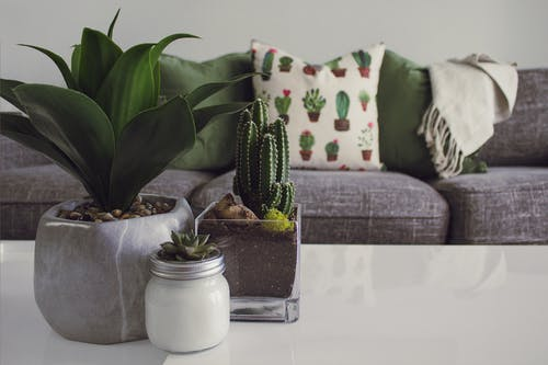 Indoor plants boost your mental health & diminish pressure to work effectively from home